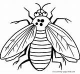Coloring Pages Fly Bugs Printable Bug Sheet Sheets Animal Flies Insects Animals Printables Cartoon Guy Getcoloringpages Letscolorit Kidsuki sketch template
