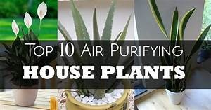 Top 10 Air Purifying Indoor House Plants Natural And