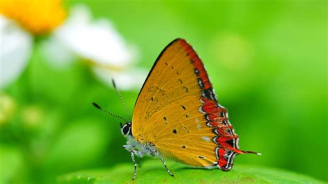 Butterfly Widescreen Pictures Hd 1080p
