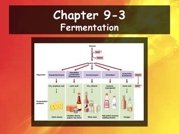 Biology  93 Fermentation Powerpoint And Guided Notes By Dustinlee14 Biology