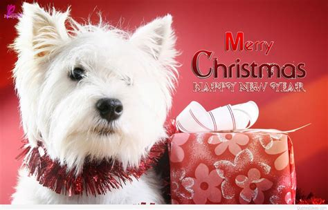 humorous merry christmas wallpapers quotes cards 2015