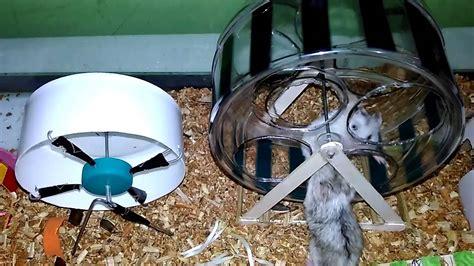 membuat rumah hamster  stik