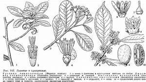 Лекарственные растения от диабета лен