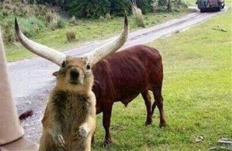funny squirrel perfectly timed pictures - Dump A Day