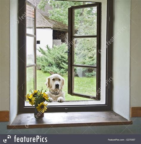 picture dog window