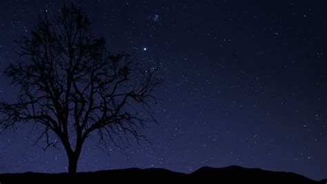 Night Sky Of Milky Way And Silhouette Tree Time Lapse