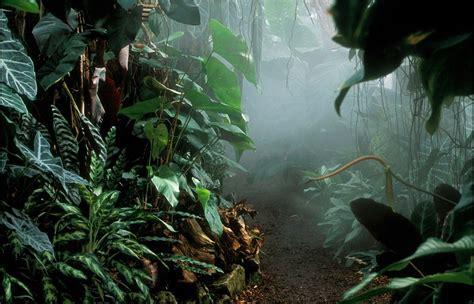 tropical rainforest climate graph