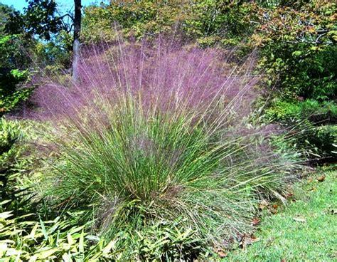 winterharte graser garten dekorative gräser im garten wissenswertes und praktische