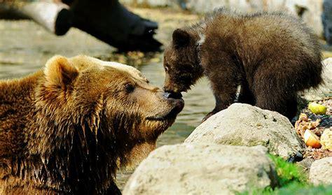 Alaska Adventure Tour; Alaska Vacation For Women; Bear Viewing