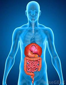 What Is The Renal Pelvis   With Pictures