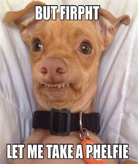 Funny Meme Sites - funny pictures of dogs with captions ideas funny sites captions and funny pictures