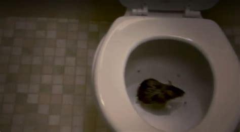 rat dans les toilettes un australien se fait mordre le p 233 nis par un serpent pourquoi les attaques par les toilettes