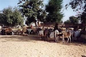 Arabischer nomade