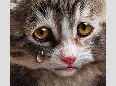 Download 100+  Gambar Kucing Lucu Galau Bergerak Terlihat Keren