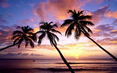 Palm Tree Trees Beach Desktop Wallpapers West