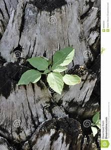 Tree, ,biology, Flora, Arboreal, Leaves, Colour, Plants ...