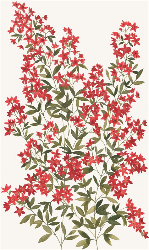 natalie ryan australian native flora
