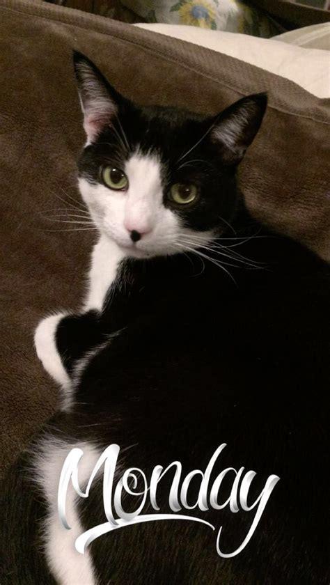 cats kitty cat tuxedo nosy mood named