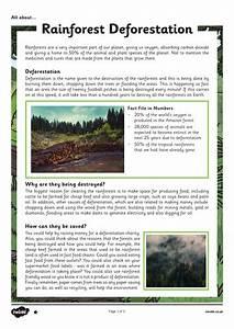 Poetry Elements Deforestation Poem Medium Term Plans Teaching Resources
