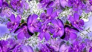 Graphics, Flowers, Purple