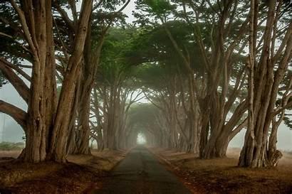 Morning Foggy Tree Lined Road Roads Windows
