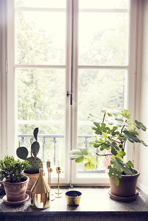 sill window decor plants ledge interior decorating sills windowsill inside indoor decoration flowers kitchen windows room plant bedroom idea trim