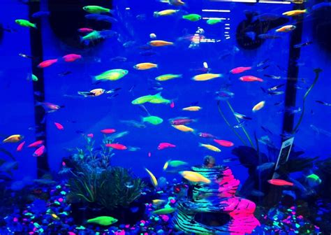 black light fish my black lights fish tanks and lights