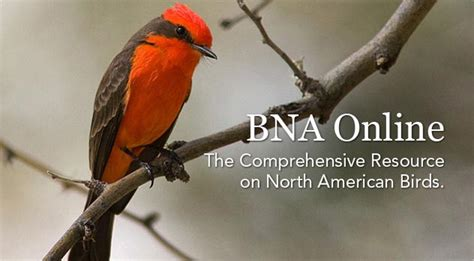 cornell lab of ornithology e store