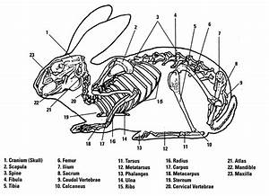 Tag: skeletal system diagram simple Archives - Human ...