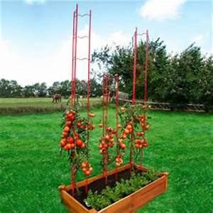 Paprika Pflanzen Abstand : gem se pflanze zwerg tomate von g rtner p tschke ~ Whattoseeinmadrid.com Haus und Dekorationen