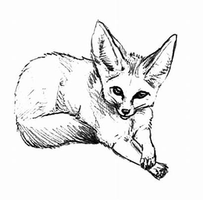 Fox Coloring Pages Desert Draw Arctic Drawing
