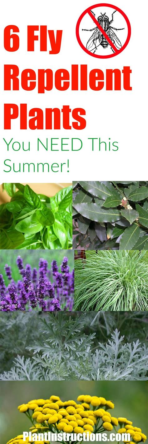 fly repellent plant 25 best ideas about repel flies on pinterest insect repellent plants plants that repel flies