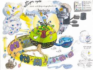 The Gulf Of Mexico Dead Zone  The Nitrogen Cycle