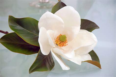 Magnolia Silk Wedding Flowers   newhairstylesformen2014.com