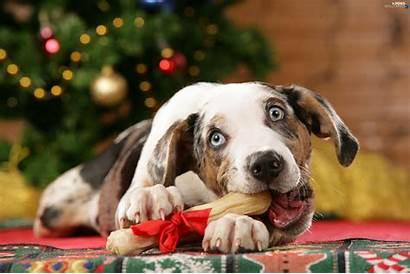Dog Bone Pet Owners Toy Said Christmas
