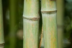 Bambus Im Winter : bambus im winter so k nnen sie ihren bambus sch tzen ~ Frokenaadalensverden.com Haus und Dekorationen