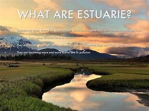 Estuaries Biome by Derrek Chan