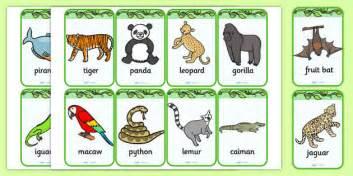 jungle flashcards jungle animal geography flash cards
