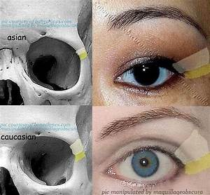 difference of corner of eye in Asian and Caucasian ...
