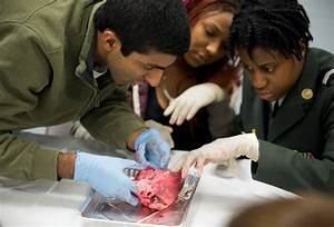 Manual Academy Students Open Their Hearts In Dissection