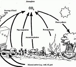 33 Carbon Oxygen Cycle Worksheet