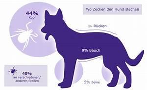 Zecke Entfernen Hund Kopf Steckt : zecken beim hund was hundebesitzer wissen sollten ~ Orissabook.com Haus und Dekorationen