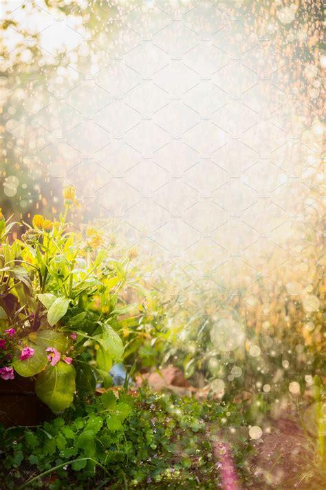 summer flowers garden background nature