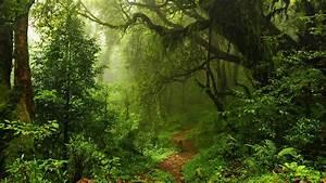 Wallpaper Summer Forest  5k  4k Wallpaper  Green  Trees