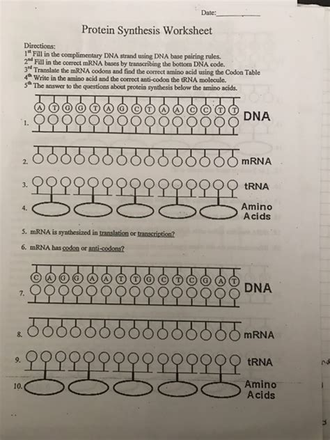 solved date protein synthesis worksheet directions 1 quot f