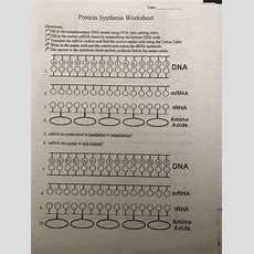 """Solved Date Protein Synthesis Worksheet Directions 1"""" F Cheggcom"""