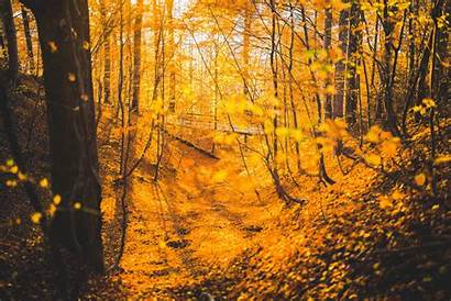 Forest Autumn Trees 5k Fall Wallpapers Orange