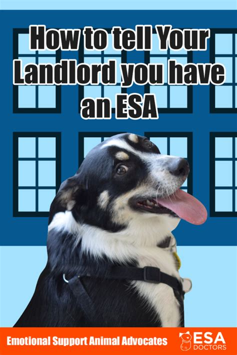 Tests reflect real workplace tasks and relevant language skills. Can a Landlord Deny an Emotional Support Animal? - ESA Doctors