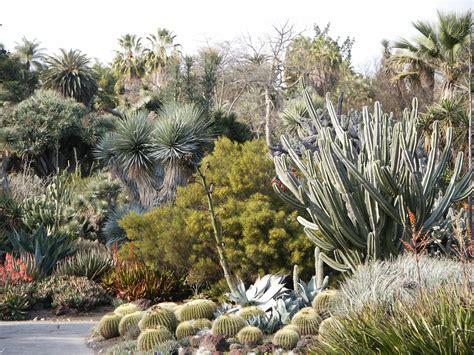 desert plants google images