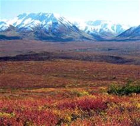 earth floor biomes tundra biomes of the world tundra